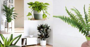 พืชเพื่อปรับปรุงคุณภาพอากาศ
