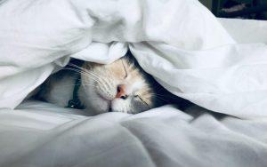 นอนอย่างไรให้เกิดประโยชน์ที่ดีกับร่างกาย