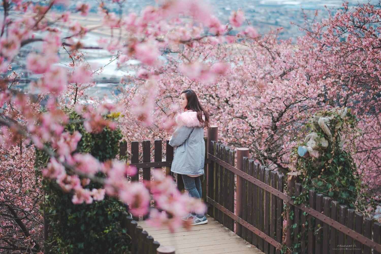 ชาวบ้านในญี่ปุ่นจับภาพสถานที่ท่องเที่ยวที่สวยงามที่สุด